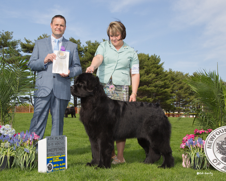Newfoundland Breeder placing national specialty