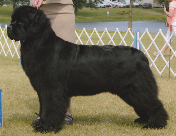 GCH Belle Harbours Radiant Mariner